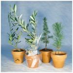 Plant d'arbre – terre cuite