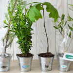 Plant d'arbre – pot zinc