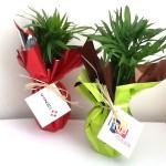 Pot palmier eco